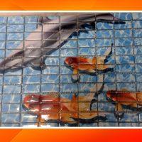 mozaik15
